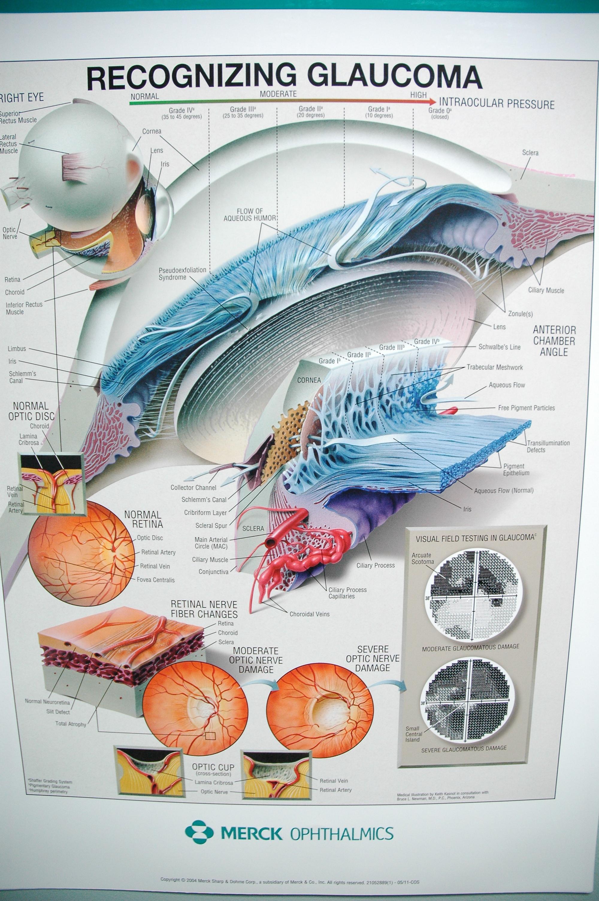 Littlefield Optometry, LLC - Optometry In Kansas City, MO USA ...